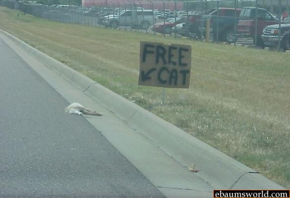 free cat picture ebaum s world