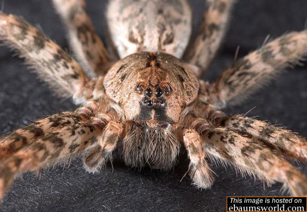 Big Scary Spiders