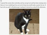 Lost Cat Email Thread