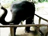 Dancing Baby Elephant Plays The Harmonica view on ebaumsworld.com tube online.