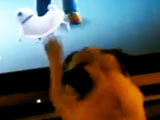 Pug Excited To See Video Game Pug