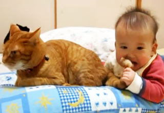 Baby Eating Cat Food