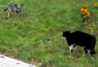 Epic Dog vs. Cat Stand Off