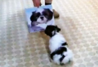 Puppy Disapproves of Calendar