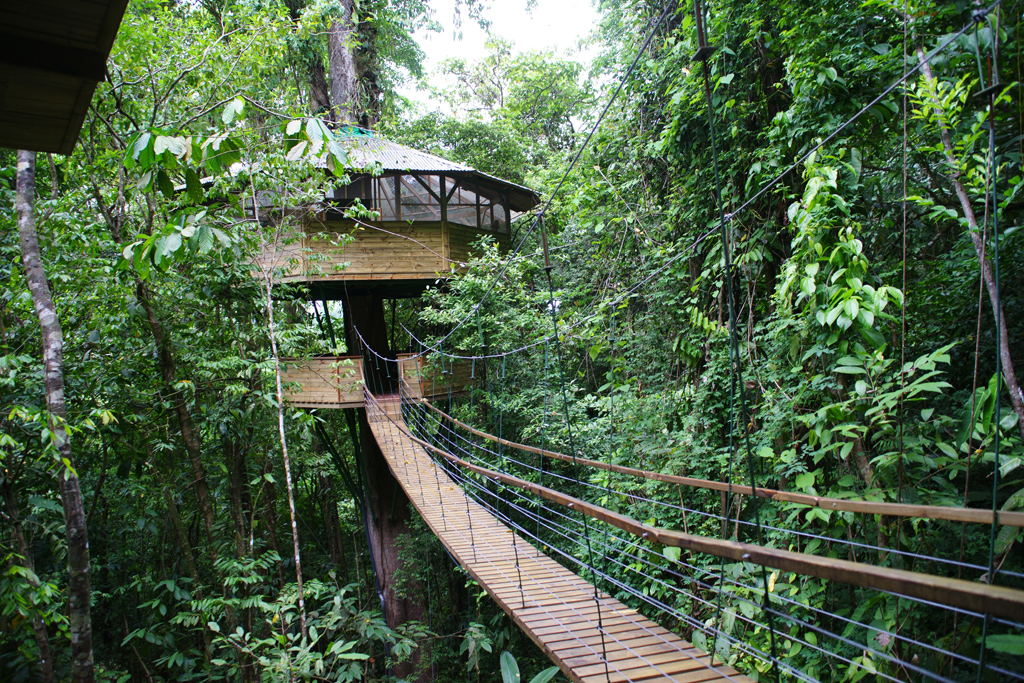 31 awesome tree houses win gallery ebaum 39 s world for Jungle house costa rica