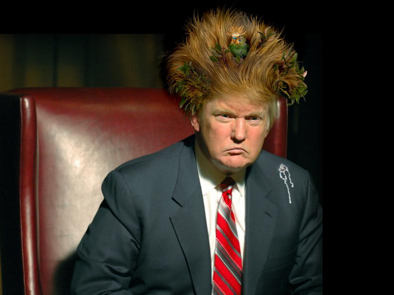 Donald Trump Funny Hair Memes : Hilarious trump memes and jokes funny gallery ebaum s world