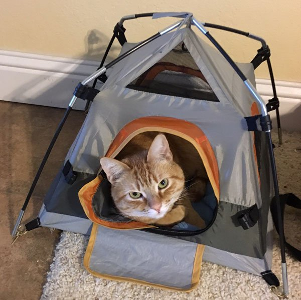 3 - Cat in a tiny but elaborately detailed folding tent.