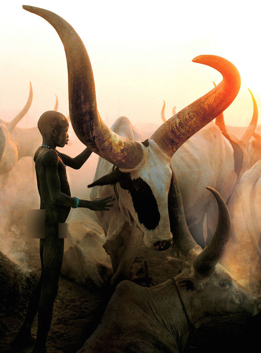1 - Kid with a bull with massive horns Ankole-Watusi cattle