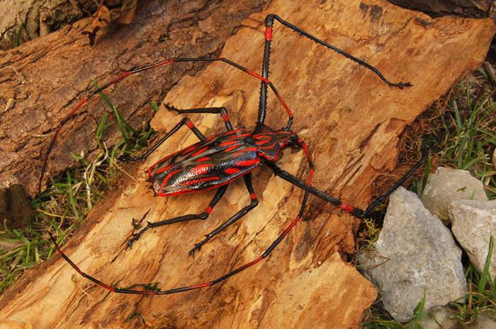 3 - maldonado213 Random Pictures From The Interweb 348