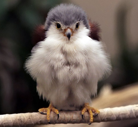 Baby Birds Of Prey - Gallery   eBaum's World