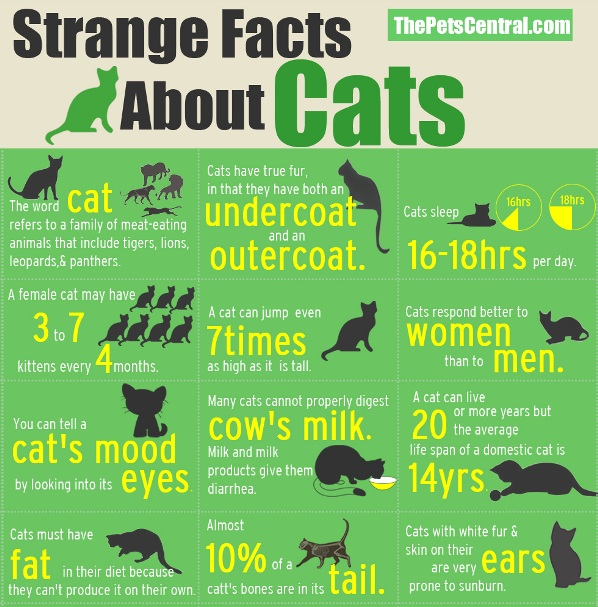 Most Interesting Facts >> Strange Facts And Fun Stuff Gallery Ebaum S World