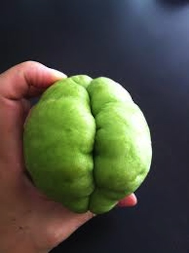 19 Fruits And Vegetables That Look Like Sexy Body Parts