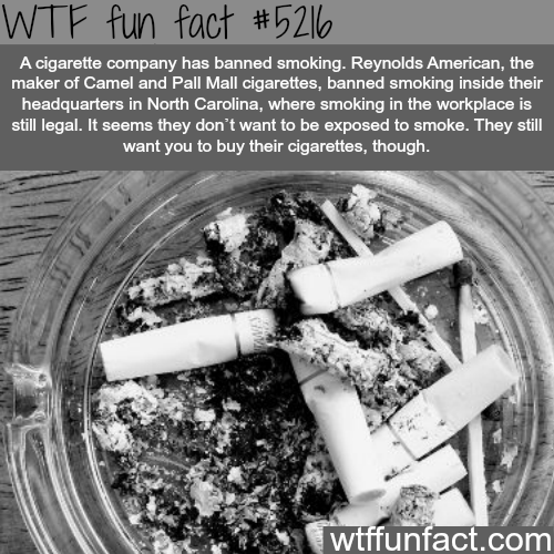 6 - 20 Fun Facts To Stick in your Think Meat