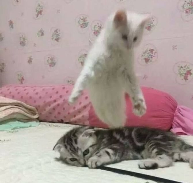7 - Rare shot of cat losing a life!