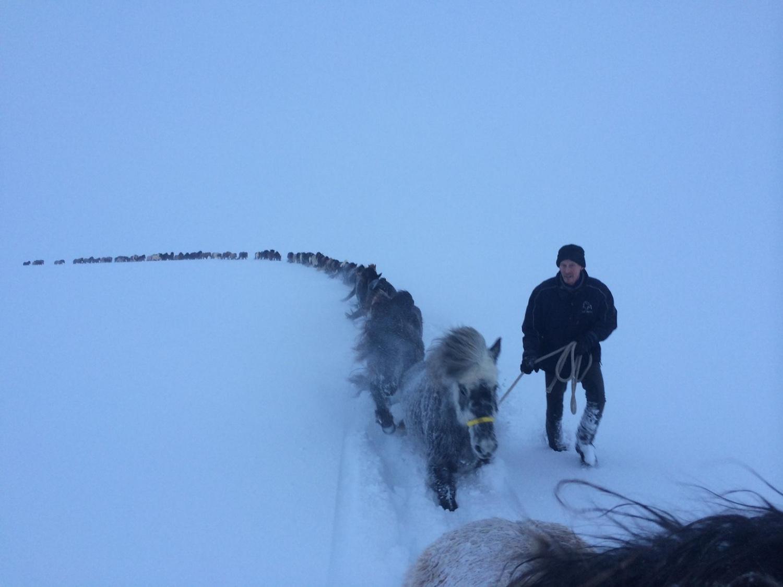 14 - Rescuing horses in Akureyri, Iceland, 2015