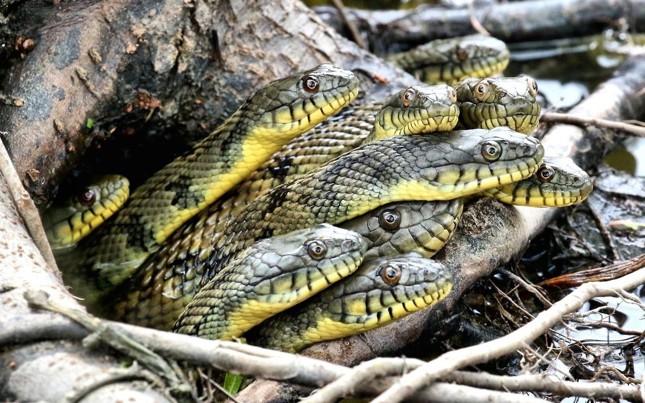 21 - Snake nest in Richmond, Texas