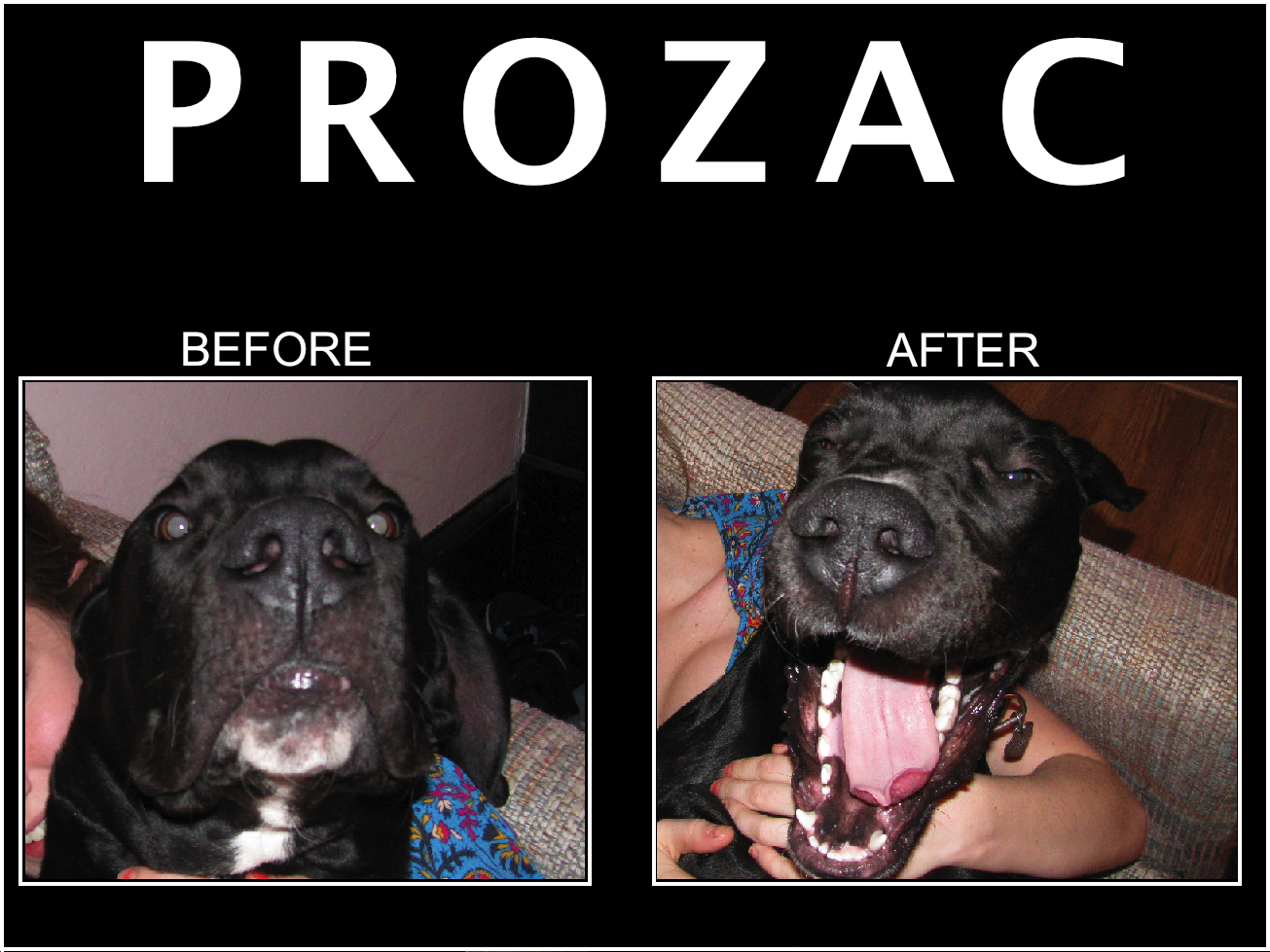 Dog Prozac Reviews