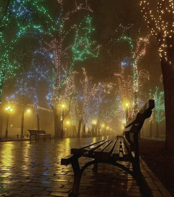 The Prettiest Christmas Tree In The World: Beautiful Christmas Lights - Picture