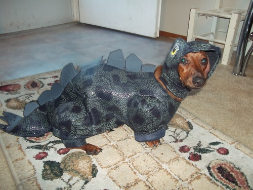 21 - Dogs In Ridiculous Halloween Costumes. How Shameful! & Dogs In Ridiculous Halloween Costumes. How Shameful! - Gallery ...