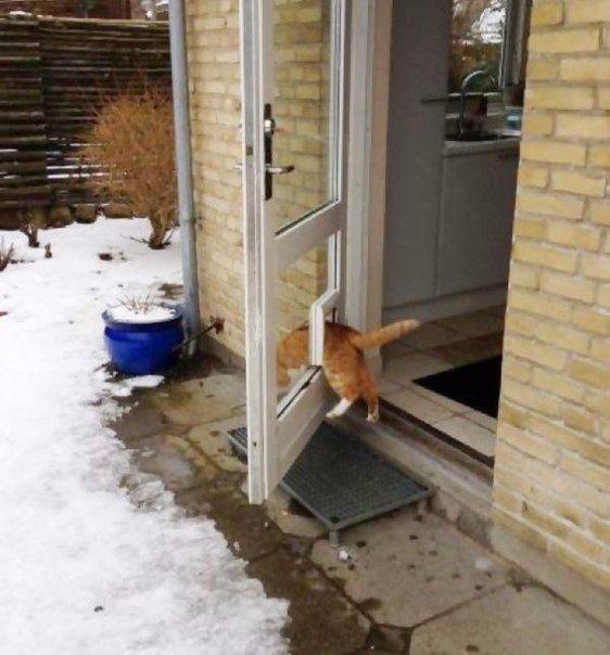 Lidojošie kaķi - Page 5 84659092