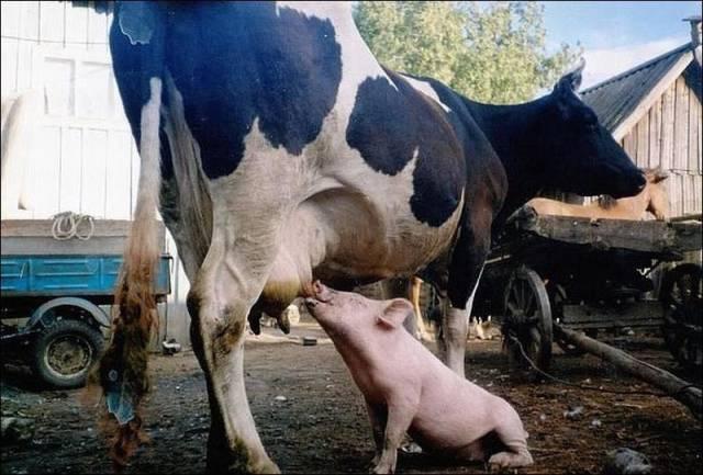 Kuriozi ar dzīvniekiem 84899406