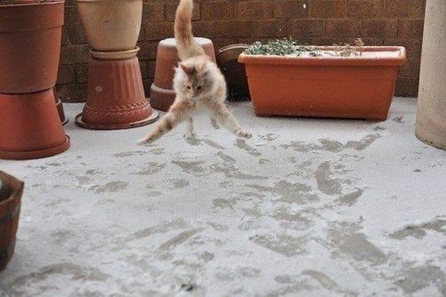 Lidojošie kaķi - Page 6 84899421