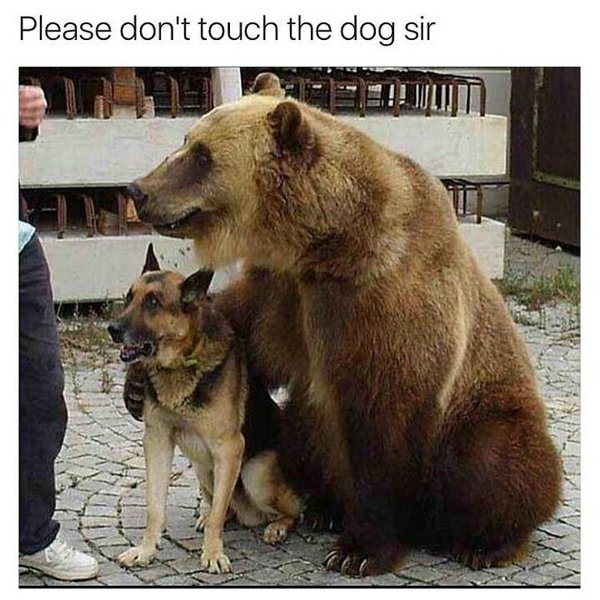 3 - Funny meme of a bear and a dog.