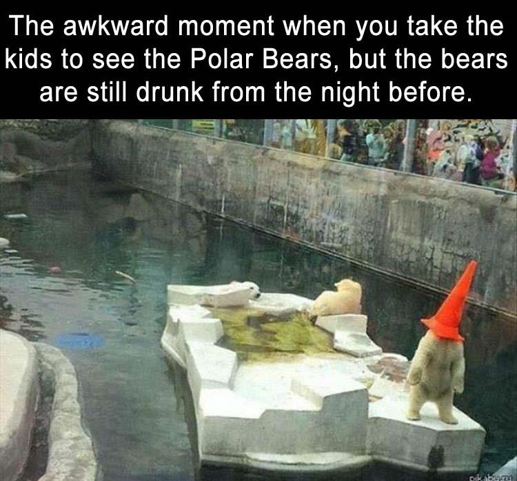 4 - When the bears are still drunk at the zoo.
