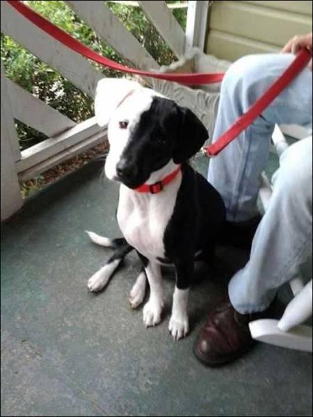 9 - Have black half white dog