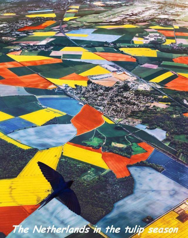 5 - Aerial view of Holland in tulip season