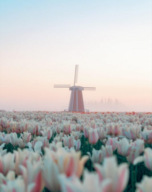 10 - You can visit this pastel windmill in Oregon that looks like something out of a Wes Anderson movie.