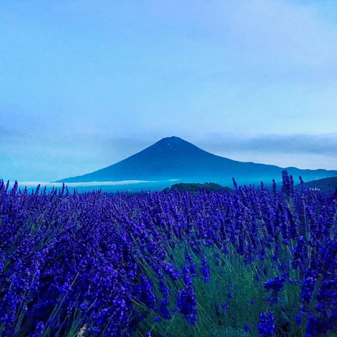 17 - This is Mount Fuji in Japan surrounded by flowering fields.