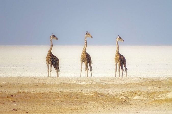18 - This insane, perfectly timed photo of giraffes in Namibia looks like something out of a movie.