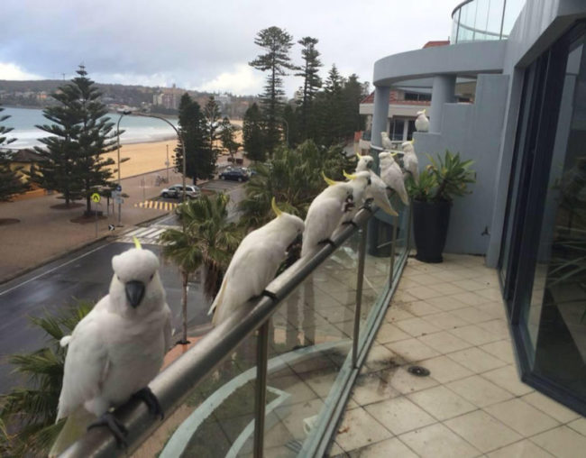 10 - Cool pic of a balcony railing that is lined with awesome exotic birds.