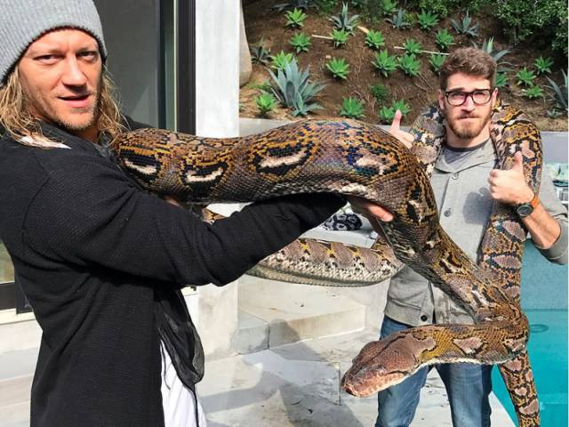 15 - Two people holding a massive snake.