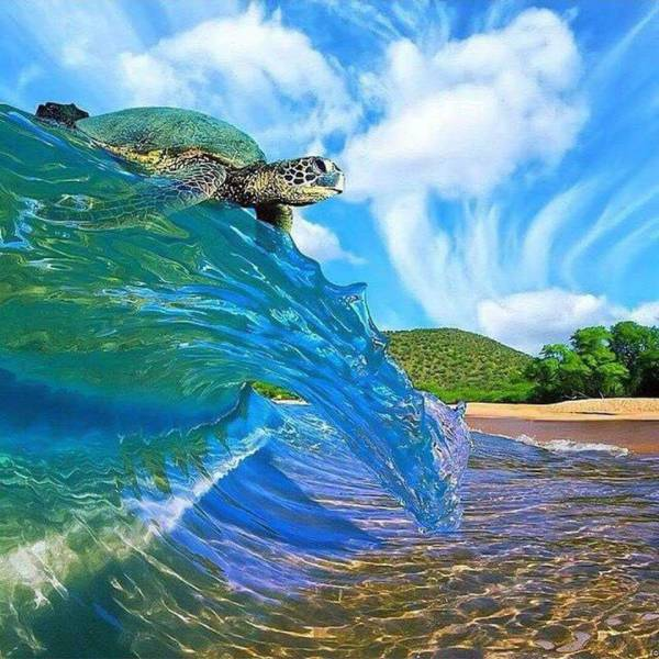 19 - Awesome picture of a tortoise surfing a breaking wave.