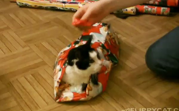 11 wrapped pets - How To Wrap A Cat For Christmas