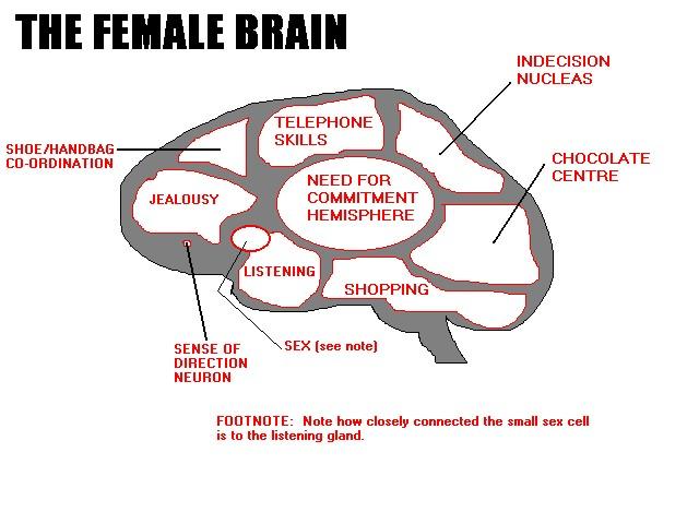 showing post media for cartoon brain women cartoonsmix com w brain cartoon understanding women gallery ebaum jpg 640x480 cartoon brain women