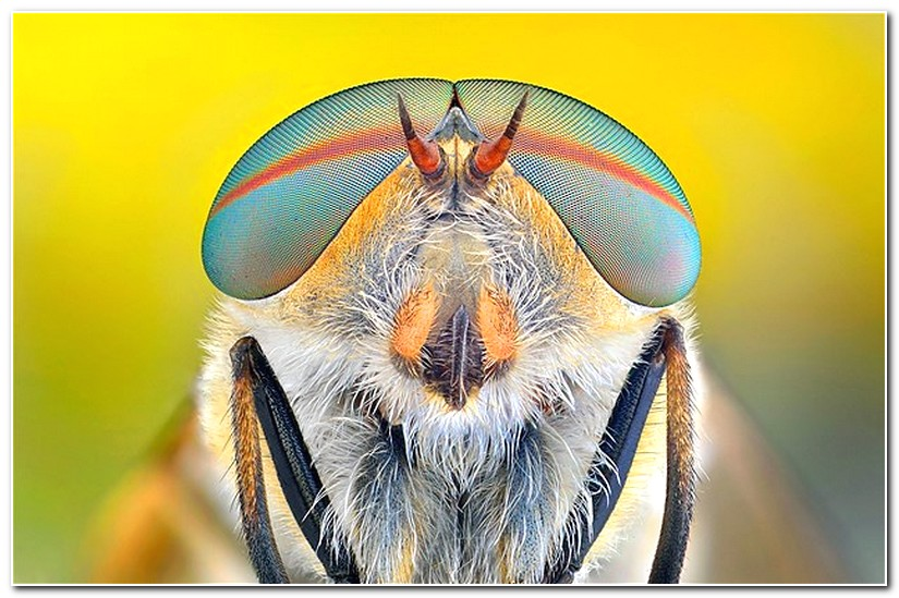 Macro Photography Of Animal Eyes Gallery EBaums World - 24 detailed close ups of animal eyes
