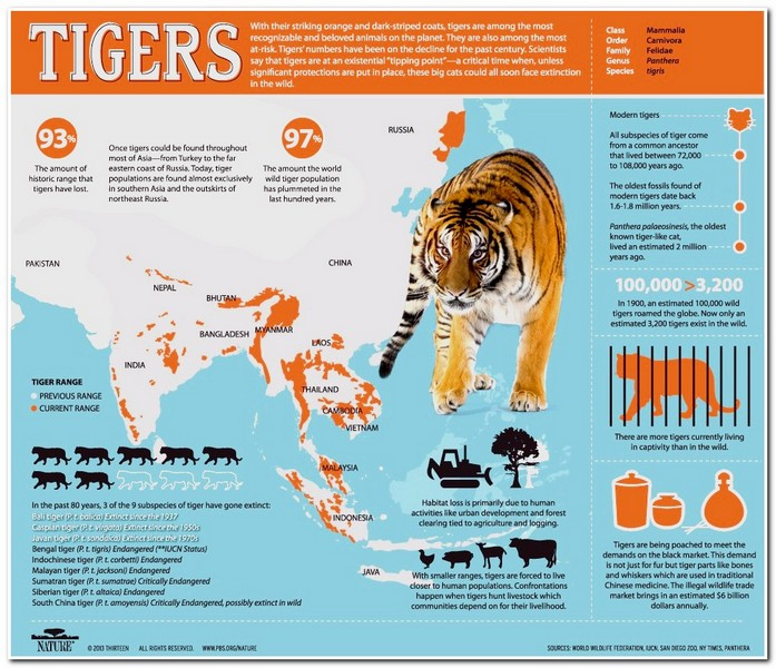 animal informative posters gallery ebaum s world