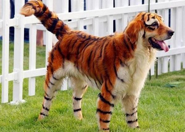 cool animals gallery ebaum s world