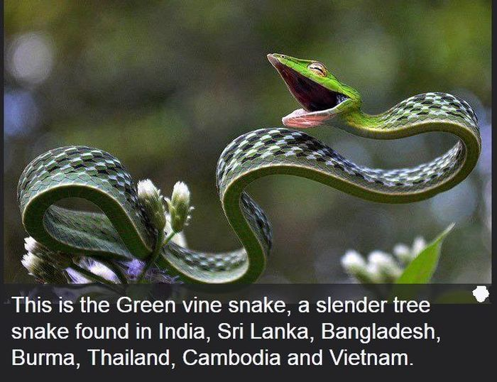 Interesting Science Facts and Photos - Gallery | eBaum's World