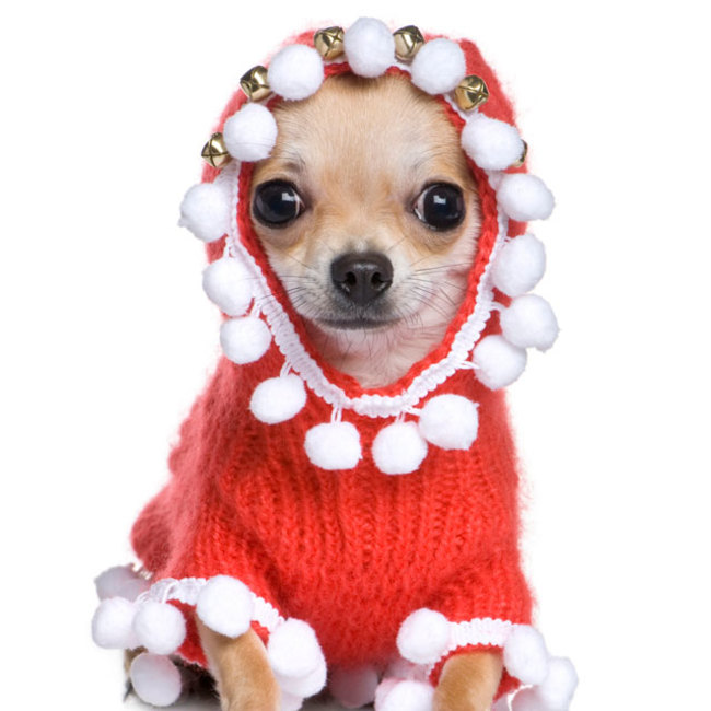 13 , 21 Pets That Are All Dressed Up In Sweaters For The Holidays