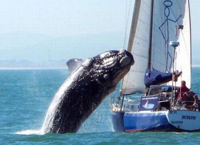 10 - A Grey whale hit a tourist boat on the Mexican coast.