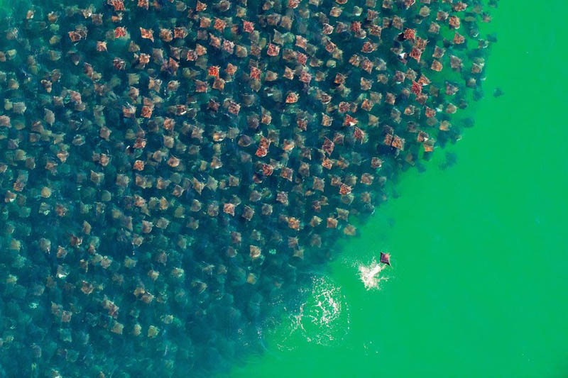 20 - Flight of the Devil Rays