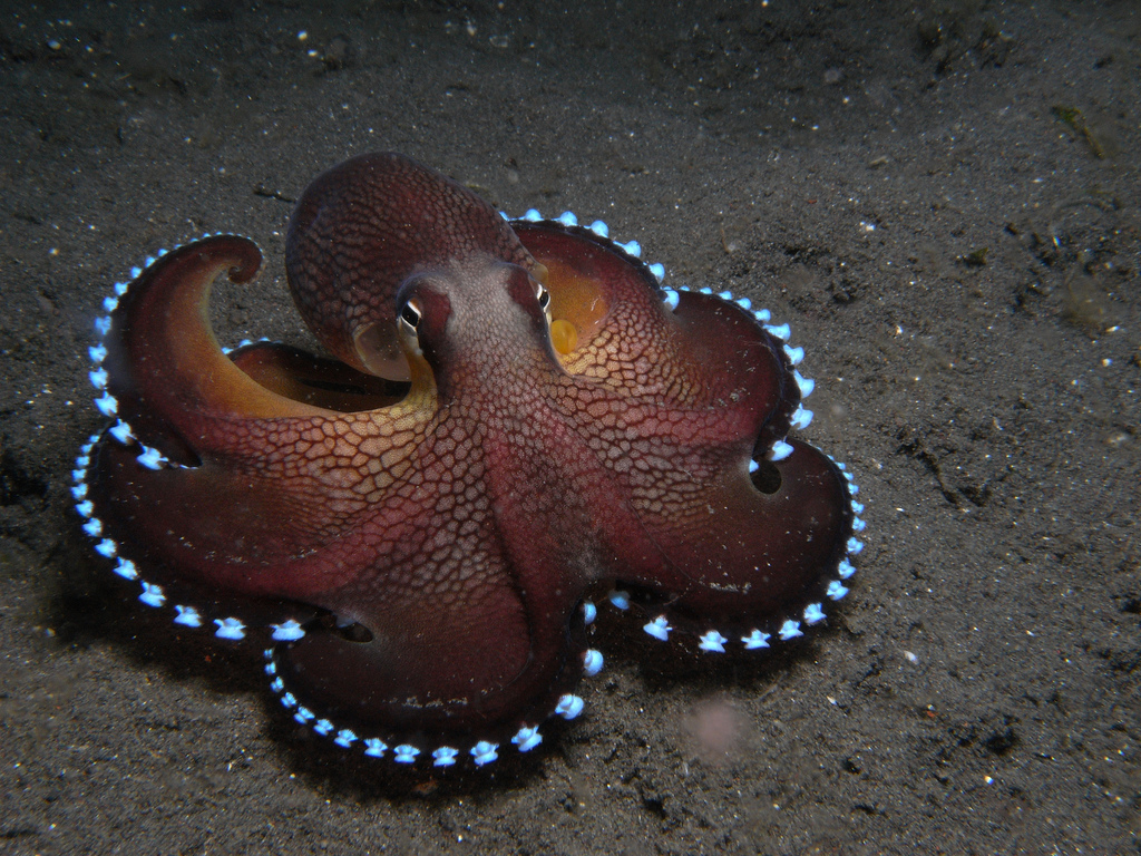 44 - The Coconut Octopus