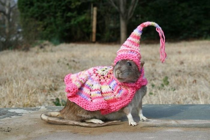 Adorable Animals Wearing Hats Gallery EBaums World - 22 adorable animals wearing miniature sweaters