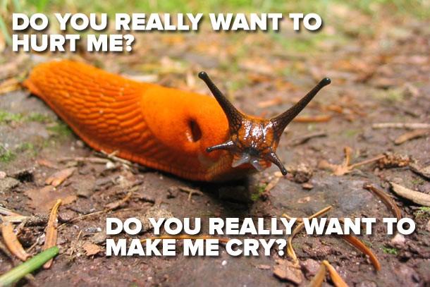 how to kill slugs humanely