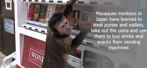 Interesting Facts That Are Fun To Know Wow Gallery EBaums - Monkey knows how to operate vending machine