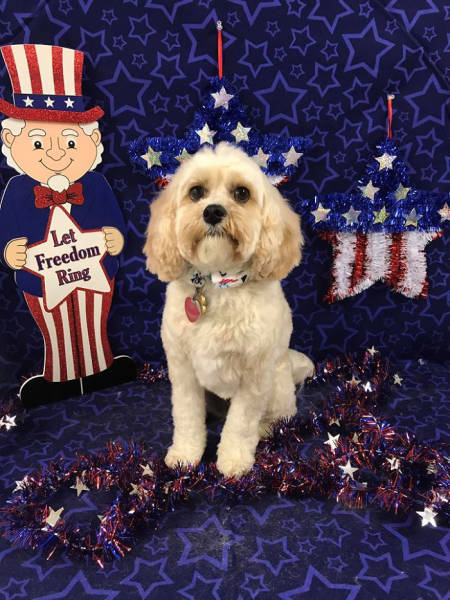 26 - furry dog standing surrounded by Americana